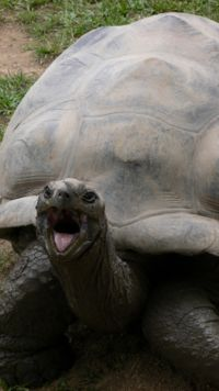 Harriet Galapagos Tortoise 175 years old