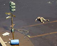 Hurricane Katrina aftermath